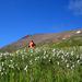 Aufstieg durchs Wollgras – der Gipfel sticht in den stahlblauen Himmel