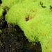 Grünes Moos und ein friedliches Bächlein