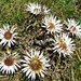 Herbstliches Blumenbouquet: Silberdisteln