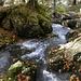 Wasser schlängelt sich durch Nagelfluhfelsen im herbstlichen Wald