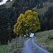 Un joli arbre en tenue d'automne