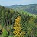 Herbstfarben im Toggenburg.