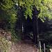 Nun geht es steil durch den Wald bis auf die Grathöhe