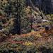 Herbst Impressionen von Sigriswilergrat