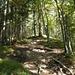 steiler,aber harmloser Anstieg durch Wald