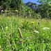 I Wildheuen sono un ambiente dalla biodiversità elevata.