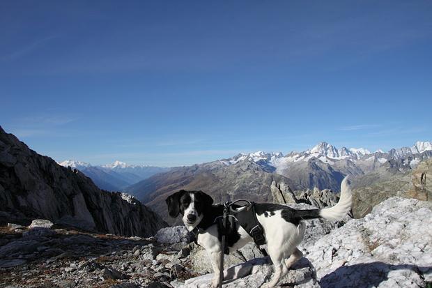 Nora mit Berner und Walliser Alpen
