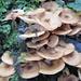 Pilzturm von Wallpaper Pilzener