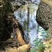 der Rickenbach schlängelt sich durchs Unterholz