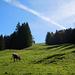 Alp-Idylle im Aufstieg zum Atzmännig