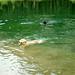 Glückliche Hunde ... mehr wie ein paar schwimmende, grüne Blätter gab' s da draussen nicht...