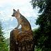 Ein Fuchs in aussichtsreicher Position