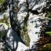 Aus dem Felsen wächst eine Birke