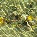 goldene Lichtreflexe im Riederbach