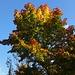 Herbststimmung am Sportplatz