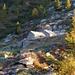 Alpe Stüell im Val di Lodrino im Morgenlicht