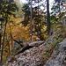 Unterwegs im herbstlich-bunten Wald Richtung Trawiesalm