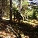 Hier zweigt der Weg ins Rauchtal, vom Normalweg auf den Hochschwabgipfel ab. Ein großer Steinmann markiert die Abzweigung deutlich