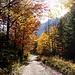 Herbstlich-schöner Buchenwald