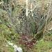 Hier kam ich mit Hilfe der Baumstämme auf den Grat hoch