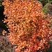 Herbst eben. Eben Herbst