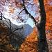 Im Aufstieg zur Alp Chöpfen. Blick zurück zum Bockmattli durch den Herbstwald