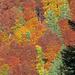 Herbstwald in allen Schattierungen