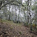 Non siamo nella <b>Foresta di Sherwood</b>, bensì a pochi chilometri da Lugano.