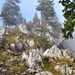 Mystische Stimmung im Klettergarten