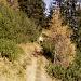 Der Aufstieg efolgt Großteils im Latschen und gemischten Waldgebiet