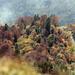 Herbstliches Kunterbunt oberhalb Quinten