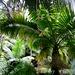 Palmen und Riesenfarne
