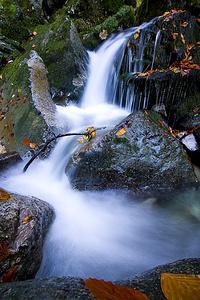 Ein Wasserfällchen im Brüeltobel