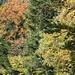 Herbststimmung bei Bélvèdere.