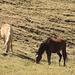 Pascolo nella Tuctuc Pampa