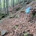 so sieht ein Waldweg im Herbst meistens aus