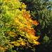 goldener Herbst I
