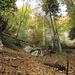 Herbstwald im Jura