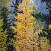 Herbst-Impressionen im Martelltal