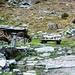 Ankunft in der Capanna Alpe Osura - Später kam ich auf die Weide und sah selber, ausser mir noch andre Kälber