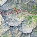 Route 2. Tag:  Capanna Osula - Zucchero - Sonogno