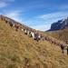 Der Berg lebt... Ameisenhaufen, 7000 setzten sich in Bewegung Talwärts