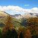 Gelbe Lärchen und Bündner Berge
