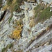 Fiori nella roccia [Flowers in the rock]