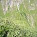 grüner wird's nicht mehr<br /><br />Botanisch gewürzt mit den grasigen Steilflanken des gegenüberliegenden Linkerskopf