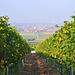 Aufstieg durch die Weinberge oberhalb Rödelsee (Lage Küchenmeister)