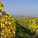 Frankenweine werden in Bocksbeutel abgefüllt