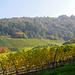 Blick zurück zum Kloster auf dem Schwanberg