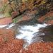 Wasser und Laub, ein schönes Farbspiel
