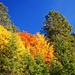 Herbstanfang am Gampenjoch